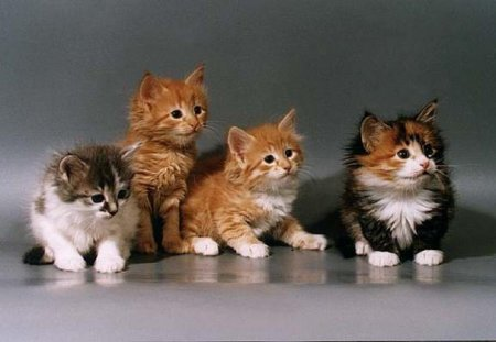 Можно ли перевозить кошек на самолете